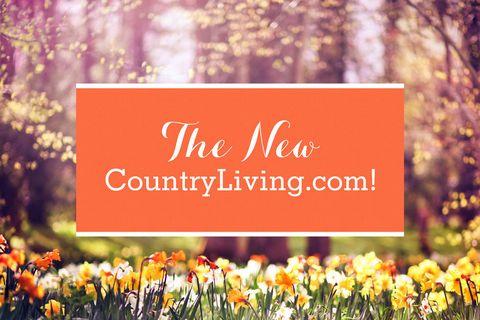 Text, Petal, Font, Flowering plant, Spring, Wildflower, Meadow, Crocus, Tulip, Prairie,