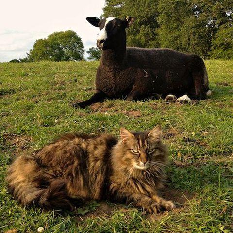 Grass, Vertebrate, Felidae, Small to medium-sized cats, Cat, Terrestrial animal, Whiskers, Pasture, Grassland, Carnivore,
