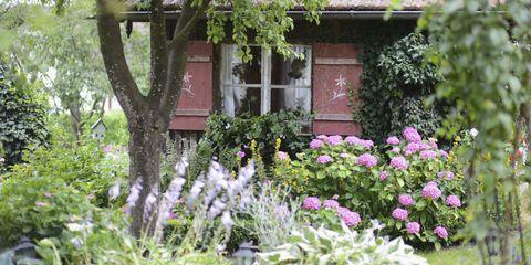 Plant, Shrub, Garden, Flower, Groundcover, House, Flowering plant, Subshrub, Spring, Wildflower,