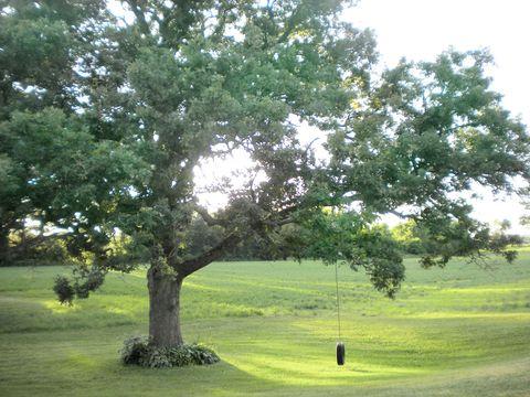 Branch, Green, Tree, Leaf, Plain, Woody plant, Land lot, Grassland, Trunk, Twig,