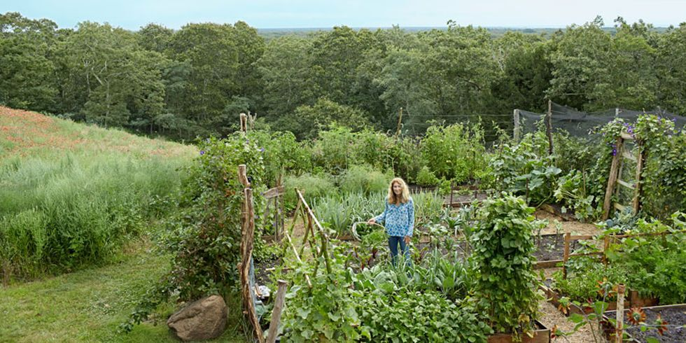 Tour This Stunning Martha's Vineyard Home and Garden