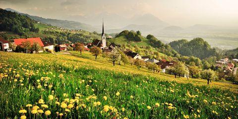 Plant, Natural landscape, Mountainous landforms, Landscape, Flower, Hill, Highland, Field, Farm, Rural area,