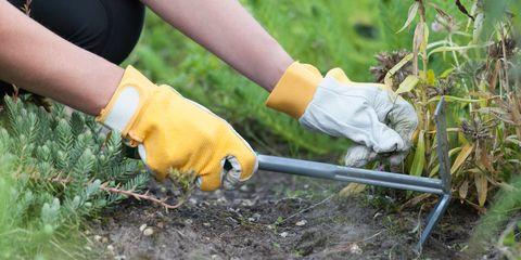 Human, Soil, People in nature, Wrist, Safety glove, Glove, Conifer, Gardening,