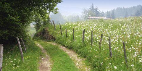 Plant, Agriculture, Plant community, Tree, Natural landscape, Field, Land lot, Rural area, Farm, Atmospheric phenomenon,