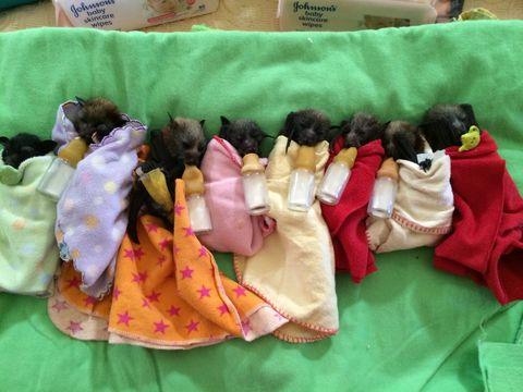 Textile, Toy, Linens, Plush, Stuffed toy, Wool, Thread, Collection,