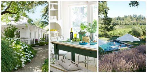 Plant, Green, Real estate, Home, Fixture, House, Garden, Herb, Bottle, Shrub,