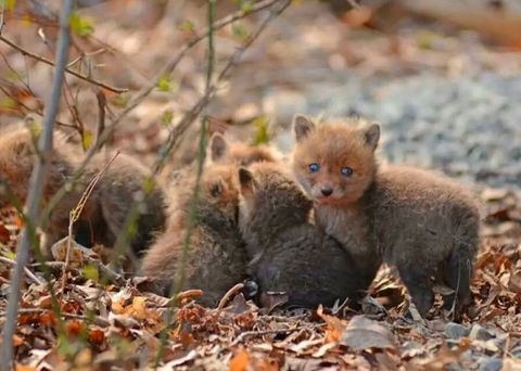 Cute Animal Photos Baby Fox Pictures