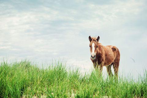 Sky, Natural landscape, Pasture, Horse, Grassland, Sorrel, Field, Grazing, Terrestrial animal, Ecoregion,