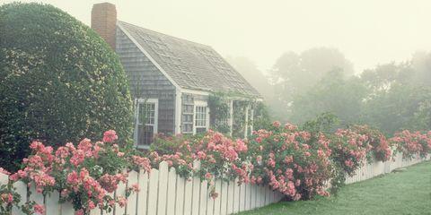Shrub, Flower, House, Atmospheric phenomenon, Real estate, Roof, Garden, Home, Fixture, Mist,