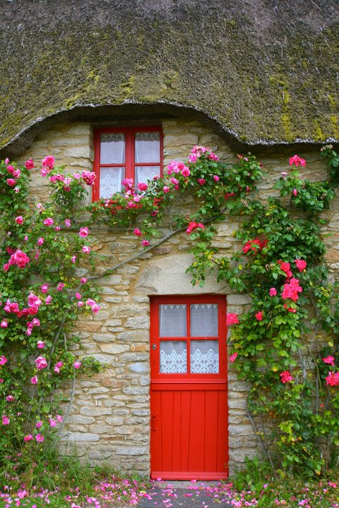 Green, Red, Flower, Door, Wall, Pink, House, Fixture, Petal, Shrub,