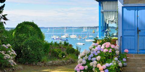 Blue, Plant, Flower, Coastal and oceanic landforms, Watercraft, Shrub, Boat, Garden, Coast, Flowering plant,