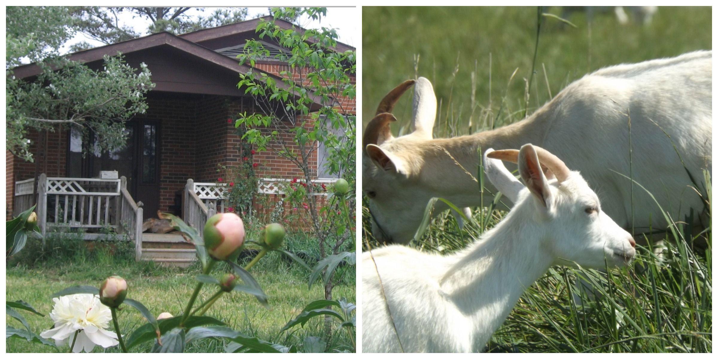 elkmont alabama goat farm essay