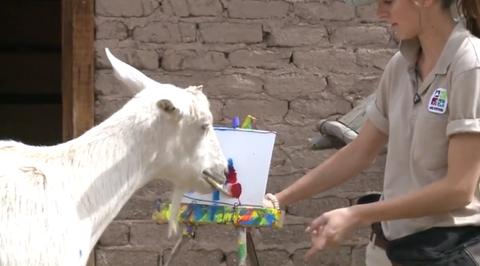 Human, Hand, Sharing, Working animal, Livestock, Horse, Brick, Play, Pack animal, Box,