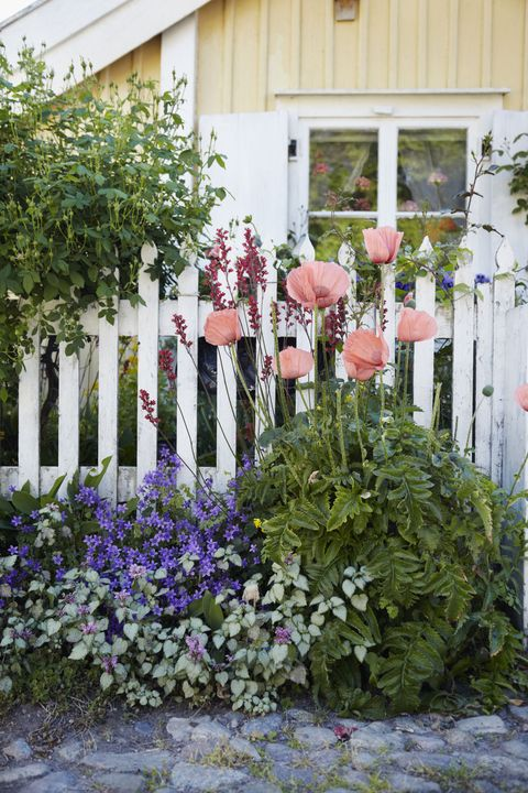 Best Gardening Tips How To Create A Beautiful Yard