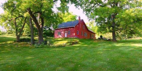 Grass, Plant, Wood, Window, Property, House, Tree, Landscape, Land lot, Building,