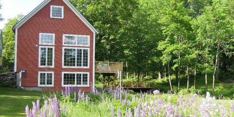 Plant, House, Lavender, Purple, Land lot, Garden, Home, Flowering plant, Lavender, Shrub,