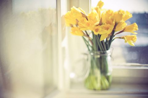 Yellow, Flower, Mason jar, Vase, Still life photography, Narcissus, Cut flowers, Plant, Spring, Still life,
