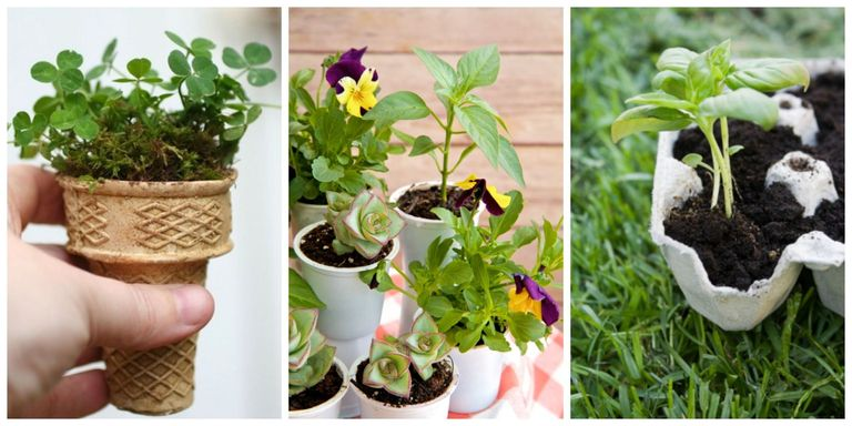Starting Garden Plants Indoors 10 everyday items you already have at home that make perfect but while theres still a chill in the air starting seedlings indoors is the workwithnaturefo
