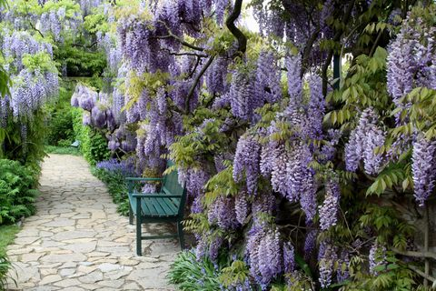 Plant, Purple, Flower, Shrub, Garden, Lavender, Woody plant, Botany, Groundcover, Outdoor furniture,