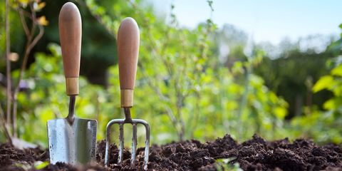 Soil, Compost, Plantation, Agriculture, Plant stem, Annual plant, Tool, Flame, Gardening,