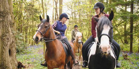 Human, Organism, Bridle, Horse supplies, Halter, Horse, Vertebrate, Horse tack, Shoe, Recreation,