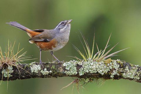 Organism, Branch, Vertebrate, Bird, Beak, Twig, Adaptation, Wildlife, Morning, Fawn,