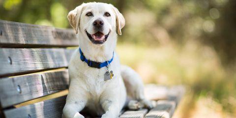 Collar, Dog breed, Dog, Carnivore, Dog collar, Snout, Companion dog, Working animal, Leash, Sporting Group,