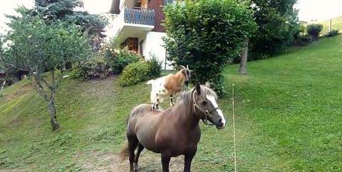 Vertebrate, Horse, Working animal, Mammal, Shrub, Horse supplies, Bridle, Garden, Land lot, Snout,