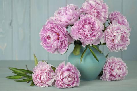 Petal, Flower, Pink, Purple, Flowering plant, Floristry, Bouquet, Cut flowers, Flower Arranging, Lavender,
