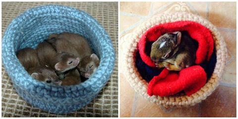 Organism, Vertebrate, Tooth, Carnivore, Fawn, Snout, Home accessories, Pet supply, Paw, Dog bed,