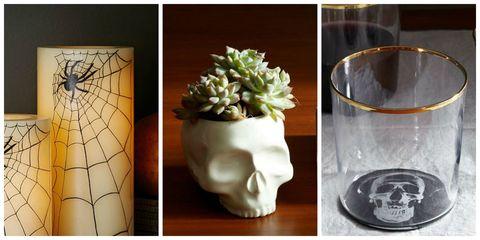 Flowerpot, Invertebrate, Glass, Flowering plant, Insect, Serveware, Artifact, Still life photography, Vase, Arthropod,