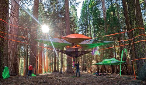 Lighting, Tree, Leisure, Public space, Sunlight, Sun, Forest, Biome, Shade, Lens flare,