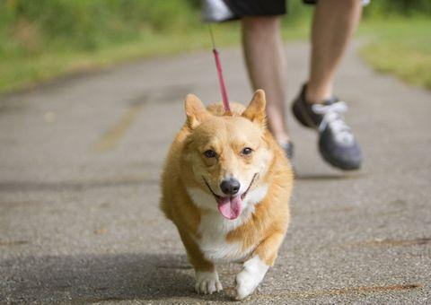 Human, Dog breed, Road, Human leg, Dog, Shoe, Carnivore, Road surface, Asphalt, Calf,