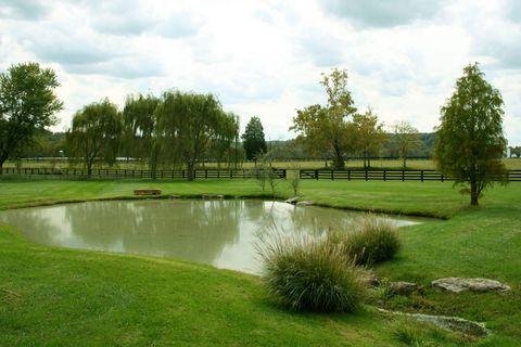 Grass, Plant, Natural landscape, Tree, Pond, Land lot, Plain, Garden, Park, Wetland,