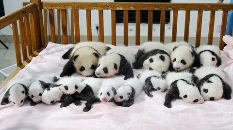 Panda, Winter, Toy, Textile, Vertebrate, White, Snow, Terrestrial animal, Freezing, Adaptation,