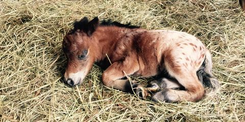 Terrestrial animal, Horse, Snout, Liver, Grass family, Wildlife, Fawn, Fur, Colt, Pack animal,