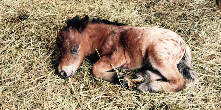 Smallest Therapy Horse Cute Miniature Horse Photos