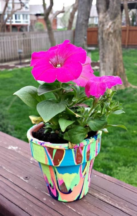 Plant, Flowerpot, Petal, Flower, Pink, Magenta, Purple, Flowering plant, Annual plant, Wood stain,