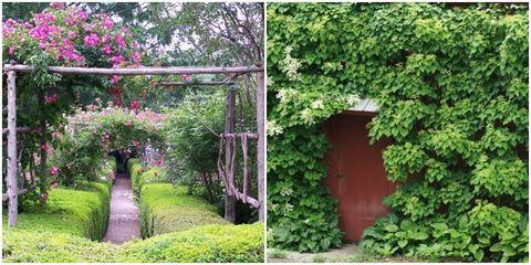 Vegetation, Shrub, Garden, Petal, Magenta, Door, Groundcover, Walkway, Backyard, Yard,