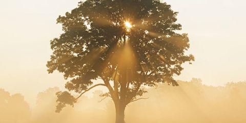 Nature, Yellow, Atmospheric phenomenon, Natural landscape, Atmosphere, Tree, Sunlight, Sun, Amber, Sunrise,