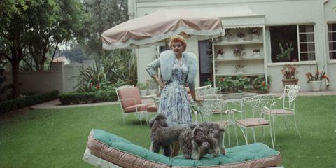 Dog breed, Carnivore, Dog, Garden, Sporting Group, Outdoor furniture, Dress, Home, Backyard, Liver,