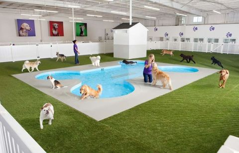 Vertebrate, Mammal, Carnivore, Dog, Dog breed, Companion dog, Canidae, Sporting Group, Games, Leisure centre,