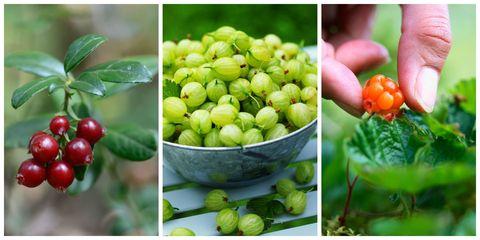 Produce, Food, Fruit, Ingredient, Natural foods, Whole food, Flowering plant, Vegan nutrition, Berry, Local food,