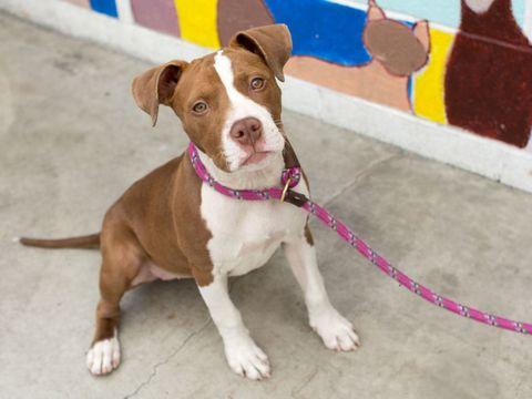 Dog breed, Collar, Dog, Carnivore, Floor, Dog collar, Snout, Dog supply, Pet supply, Liver,