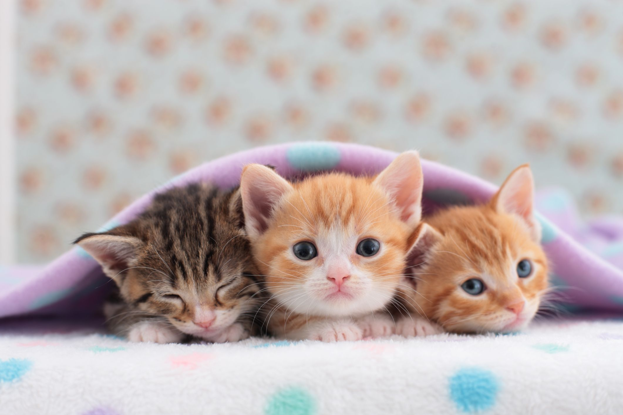 Cats that Stay Small - Tiny Kittens For Your Tiny Home