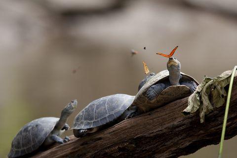 Nature, Organism, Invertebrate, Vertebrate, Adaptation, Beauty, Pond turtle, Reptile, Insect, Grey,