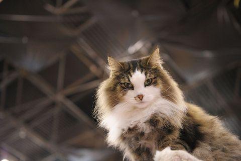 Cat looking superior