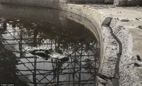 Reflection, Amphitheatre, Arch, Ruins, History, Ancient rome, Historic site, Ancient roman architecture, Ancient history, Archaeology,
