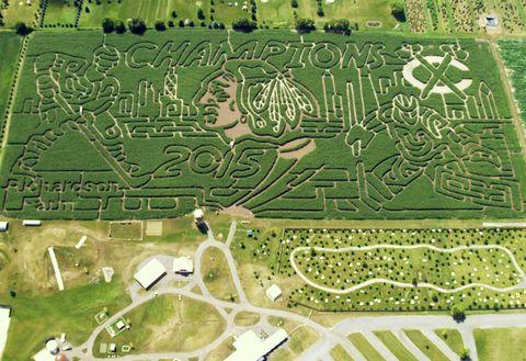 Landscape, Land lot, Plain, Urban design, Garden, Plantation, Bird's-eye view, Thoroughfare, Intersection, Aerial photography,