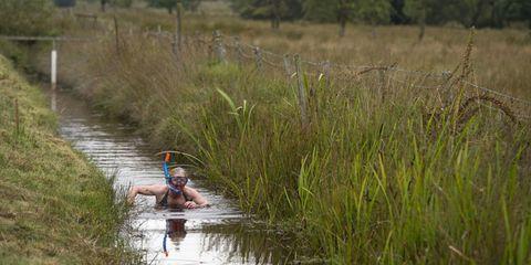 Water resources, Fen, Marsh, Wetland, Freshwater marsh, Rural area, Grass family, Salt marsh, Flowering plant, Grassland,